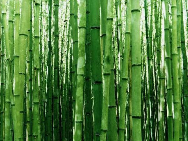 La lingerie verte une tendance dans l 39 air du temps - Couleur assortie au vert ...