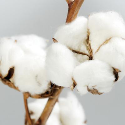 Assez Lingerie Coton : Pour que la lingerie ne rime pas avec allergie CX47